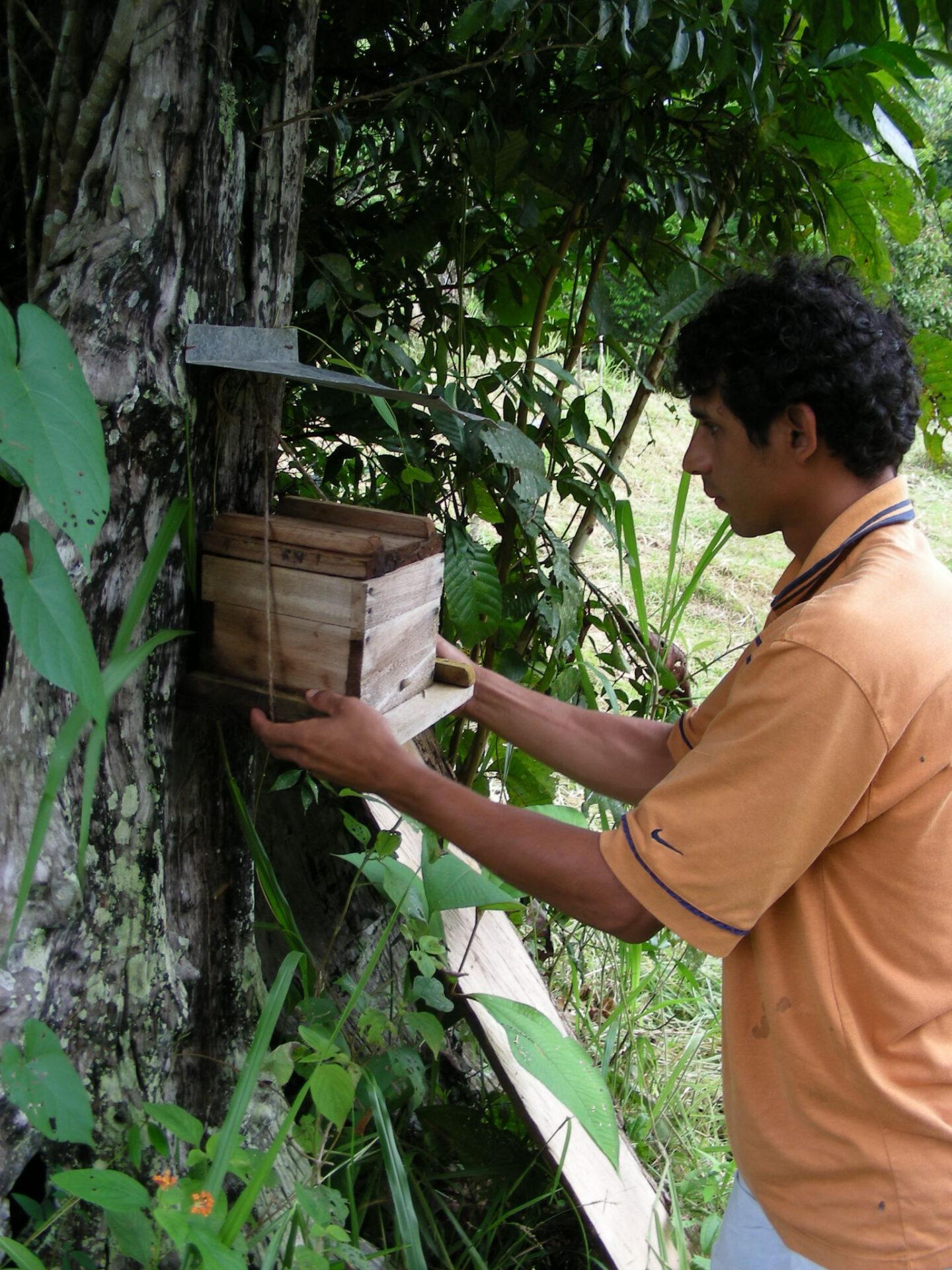 Anbringen eines Bienenkastens