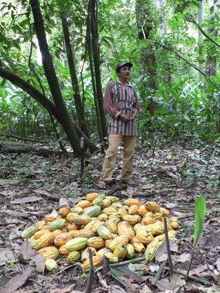 Kakaosammler