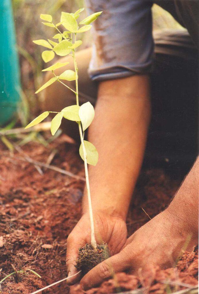 Pflanzer Hände